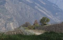 Charrat (bulbocode909) Tags: valais suisse charrat nature printemps vignes montagnes arbres vert