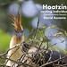Hoatzin, Opisthocomus hoazin