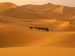 Your Morocco Holidays (yourmoroccoholidays) Tags: morocco desert sahara marrakech merzouga treck tours ouarzazate atlas camel travel tourism