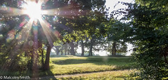 Morning Sun (M C Smith) Tags: sun gold green trees bushes plants grass canon powershot sx60hs path sky blue