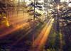 First Light...::[9.000+ VIEWS] (ktania) Tags: bear camera morning trees light red sun sunlight color tree green nature colors beautiful fog fairytale forest canon landscape greek 50mm lights landscapes wolf colorful europe walk fallcolors greece automn 6d canonef50mmf14usm kastoria naturesfinest landscapephotography grammos canoneos6d kardpostal taniaphotography tingerbell taniakoleska eptachori