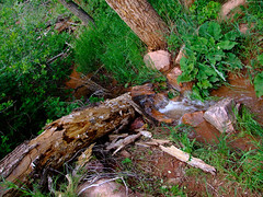 "Small stream running over stone and log • <a style=""font-size:0.8em;"" href=""http://www.flickr.com/photos/34843984@N07/14924283973/"" target=""_blank"">View on Flickr</a>"