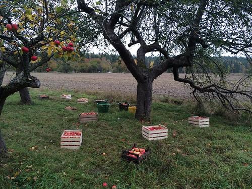 2014-10-12 Harvest Time at Rosendal!