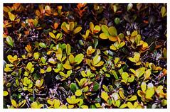 (florbbg) Tags: plants nature argentina colors photoshop buenosaires nikon flash zarate