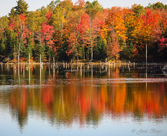 Scène d`automne 7 (josboyer) Tags: de lest cantons sepaq parcdumontorford