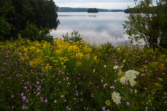 Tupper Lk, Bog R 2 (David Lee Gottlieb) Tags: mushroom landscapes adirondacks newyorkstate tupperlakeny bogriver
