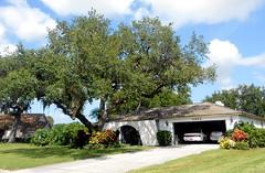Sarasota - House After 2014 Tree Work (roger4336) Tags: house tree oak florida kingston liveoak sarasota 2014 kingstondrive gulfgateeast