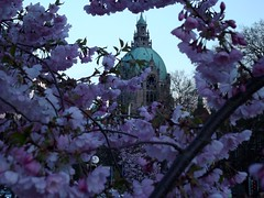 Rathaus Hannover (rckem) Tags: abend hannover blume rathaus blüte frühling neuesrathaus abends rathaushannover frühlingsabend