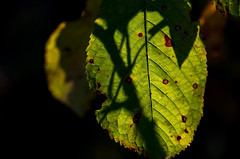 crossing (impix) Tags: wood sun fall forest schweiz switzerland leaf sticks bush herbst grn dots blatt wald shining schatten gree strauch popping shadwo punte scheinen bsche