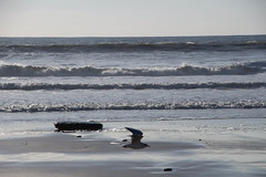 montalivet (Cilcgaillard) Tags: mer sable vague plage banc mouette cabane saison arrire maitre nageur montalivet