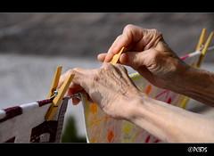 Estenent (PCB75) Tags: ma hands hand main manos clothes mans mano mains tender fusta roba clothe  drap pina tendiendo estendre a3b eskuko estenent drapdecuina