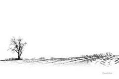 Lonely (david.horst.7) Tags: winter snow tree scenery scene