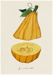 The Man Who Grows Objects - Cucurbis Necklis (Philipp Zurmoehle) Tags: plants plant man illustration pencil watercolor pumpkin fun botanical design necklace funny drawing who grow illustrations drawings objects watercolour nrnberg grows frischesdesign themanwhogrowsobjects
