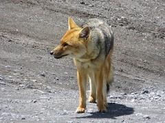 Latacunga en Cotopaxi-80