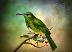 Perched on Branch (maom_1 (Off, most of the time)) Tags: fineart digitalpainting digitalcollage