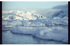 1998_12-006-22-G (becklectic) Tags: bird penguin antarctica 1998 iceberg icefloe views100 antarcticpenninsula worldtrekker