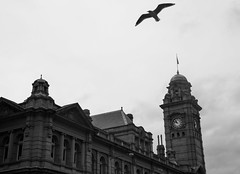 untitled (paralelsuns85) Tags: street city bw building bird clock architecture canon blackwhite sandstone seagull clocktower tasmania hobart gpo silvergull 600d