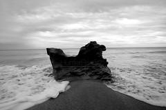 Alone (Lost Odyssey) Tags: ocean shells beach water sunrise rocks surf waves florida barrel paddle wave surfing atlantic surfboard tropical surfers reef skimboard
