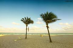 Miami - 2013 (naldomundim) Tags: praia beach canon florida coconut miami south wide 5d fl 16mm ultra coqueiro naldo mark2 mundim naldomundim naldim