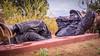 half an hour nap (lancenesbitt) Tags: life trees boy sleeping red wild arizona man black nature statue rock bronze person sony cement sedona size napping northern brass nex nex5