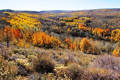 Fall Foliage Steens Mountain