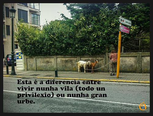 Viva o rural