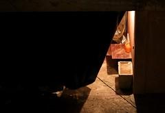 2014 07 - Marrakech & Ouzoud Morocco  2109 (ikeofspain) Tags: city trip travel holiday hot nature leather dessert waterfall market tea northafrica mint camel morocco heat marrakech souk marrakesh cascada tannery ouzoud littleadventures berbertoad azalil