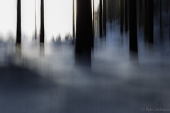 Moving (petrisalonen) Tags: moving move winter forest outdoor nature art photoart blue trees