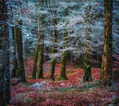 Into the Mystic #12 (Matt Anderson Photography) Tags: 2017 landscape mattandersonphotography scotland uk unitedkingdom hoarfrost magical color nopeople river garry loch oich invergarry december winter lush nature frost frosted fragility ethereal woodland tree outdoors paranormal mystery fantasy tranquilscene fog sunrisedawn coldtemperature scenics traveldestinations autumn idyllic meadow ephemeral emergence majestic ruralscene beautyinnature beechtree moss root perthshire theend madison wisconsin usa