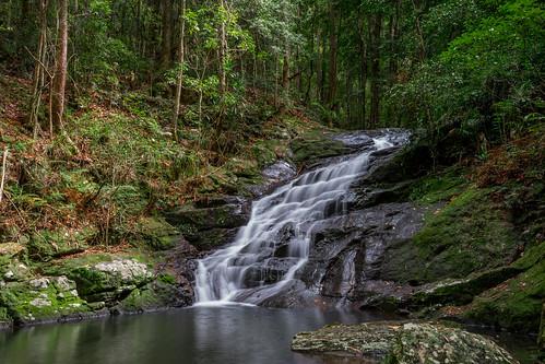 Picnic Creek, Kondalilla National Park
