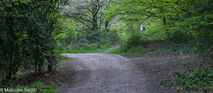 Forest Access Path (M C Smith) Tags: path trees plants grass green forest people pentax kp