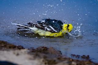 Splish..Splash