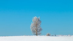 almost alone (Sergey S Ponomarev - very busy) Tags: sergeyponomarev canon 70d landscape paysage paesaggio winter inverno january snow neve tree lonely blue cold frost kirov russia russie russland north nord texture сергейпономарев природа пейзаж снег зима холод россия вятка киров дерево
