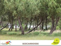 biscarrosse_pins (Tourisme Landes) Tags: landes fleurs vvf