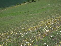 IMGP0545 (Alvier) Tags: schweiz graubünden albula albulapass engadin albulatal fahrrad velo