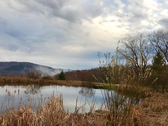 After the rain (Troika33) Tags: catskills pussywillow spring pond landscape reflections