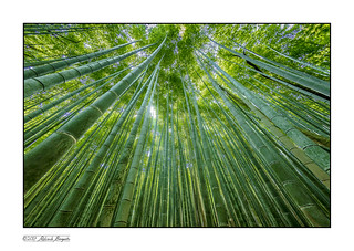 In the Bamboo Forest - Kyoto