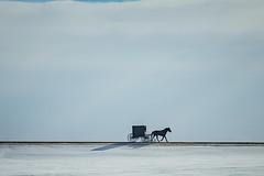 Buggyworks (Notkalvin) Tags: buggy amish horses horse transportation rural southdakota minnesota wide winter shadow notkalvin mikekline notkalvinphotography outdoor