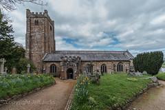 St Michael the Archangel K1__2930.jpg (screwdriver222) Tags: chagford daffodils churchyard pentax church tower k1 graveyard hdpentaxdfa1530mmf28edsdmwr steeple devon stmichaelthearchangel england unitedkingdom gb