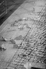 Leafs and Sidewalk (UsualRedAnt) Tags: berlin deutschland leicasl glas charlottenburg reflextion lützowstr pflanze blatt spiegelung pflaster varioelmarit128402490mm stil f56 natur schwarzweis germany style