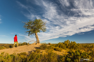 A Lonely Tree and the Man in The Karoo - Northern Cape, South Africa