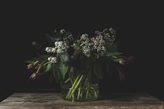 (CarolienCadoni..) Tags: sonyslta99 sony 50mmf14 sal50f14 flowers tulips light bokeh
