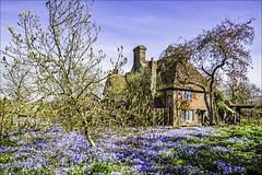 Spring @ Sissinghurst (Elaine 55.) Tags: sissinghurstcastlegardens floral spring gardens kent