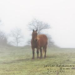 Horse in the fog (Javier Colmenero) Tags: caballo horse alava euskadi ullibarrigamboa niebla fog nikond7200 nikon nikkor18105 alavavisión loschicosdelalba sunset amanecer