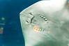 hello friend! (Rae Gallucci) Tags: animals animal stingray happy aquarium jolly smile blue cute