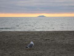 Solitudes .... / Solitudini ....  [Explored] (Adriana 2012) Tags: seascape sunset bird solitude clouds sea