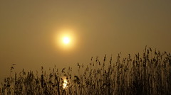 Vernebelt (Wunderlich, Olga) Tags: gras strelasund morgen sonnenaufgang nebel sonne