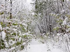 IMG_2822 (sjj62) Tags: s90 snow snowscape lith lakeinthehillsil winter winterscape