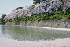 moat of Sunpujou Castle (peaceful-jp-scenery (busy)) Tags: sakura cherryblossoms someiyoshino spring flower shizuoka sunpujoupark 駿府公園 桜 ソメイヨシノ 春 葵区 静岡市 日本 sony cybershot dscrx100 carlzeiss 28100mmf1849 20mp