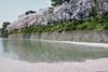 moat of Sunpujou Castle (peaceful-jp-scenery (busy)) Tags: sakura cherryblossoms someiyoshino spring flower shizuoka sunpujoupark 駿府公園 桜 ソメイヨシノ 春 葵区 静岡市 日本 sony cybershot dscrx100 carlzeiss 28100mmf1849 20mp